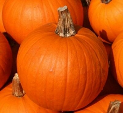 Pumpkin Small Sugar -15 seeds -  Vegetable