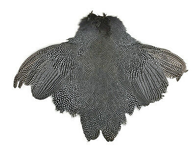 """GUINEA FOWL SKIN with WINGS /& TAILS  /"""" Purpul /""""    very good quality"""