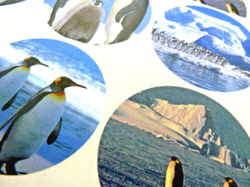 Wildleben Tier Etiketten XPENG51 12 Pinguin Sticker