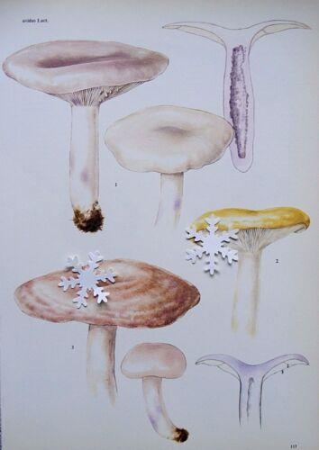 "Vintage Botanic Mushroom Art Print Ready to Frame ** 8/"" x 11.5/""  ** SEE VARIETY"