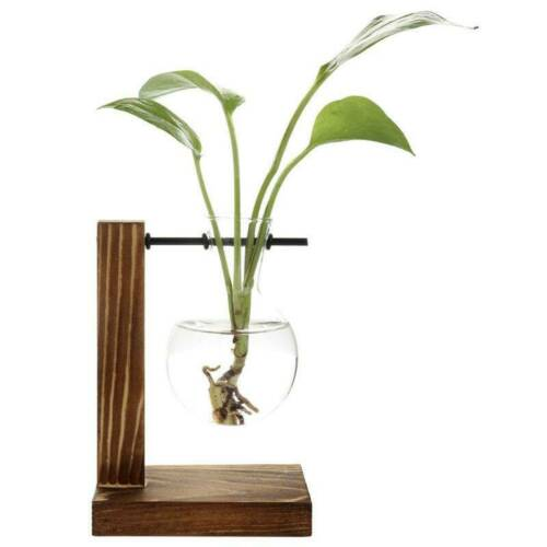 Desktop Glass Planter Bulb Vase Solid Wooden Stand Hydroponic Plant Container
