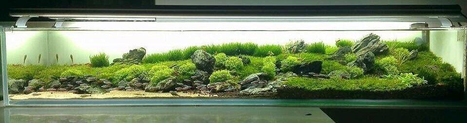 aquaticplantsaustralia