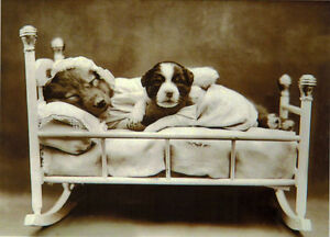 DOG-MAMA-AND-HER-CHILD-IN-THE-BED-Modern-postcard-Russian