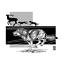 Illustrated-Science-Artwork-9-Piece-Guardian-Series-Carnivore-Prints thumbnail 5