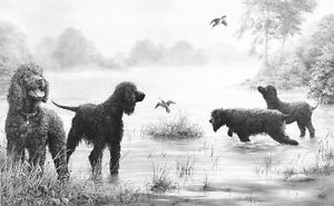 Mike-Sibley-CONNEMARA-ENCOUNTER-Irish-Water-Spaniels-Art-Prints-Gun-Dogs