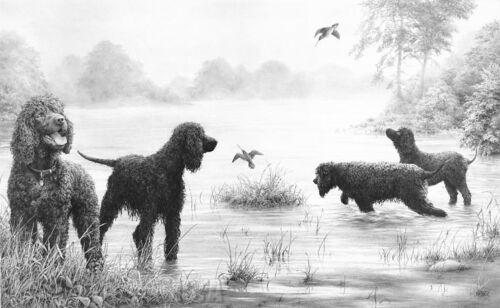 Irish Water Spaniels Art Prints Gun Dogs Mike Sibley CONNEMARA ENCOUNTER