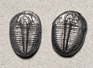 AMAZING-matching-pair-of-JEWELRY-ELRAITHIA-KINGII-TRILOBITES