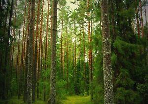 A1-Nature-Rain-Forest-Landscape-Poster-Art-Print-60-x-90cm-180gsm-Gift-13079