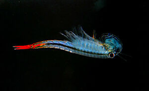 Brine-Shrimp-Alternative-0-30-g-Live-feed-for-Betta-Guppy-Discus-Tropical-fish