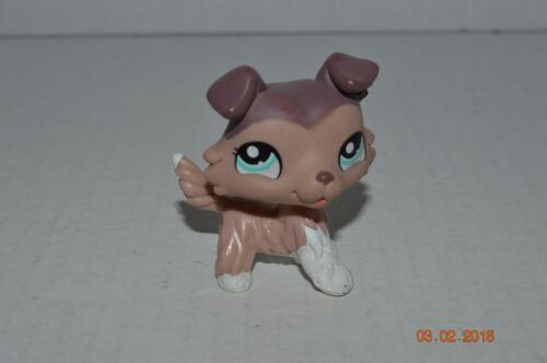 Littlest Pet Shop~#1330~Collie~Puppy Dog~Brown Mocha White~Aqua Blue Dot Eyes
