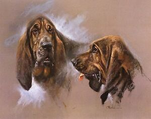 BLOODHOUND-DOG-FINE-ART-LIMITED-EDITION-PRINT-by-the-late-Mick-Cawston