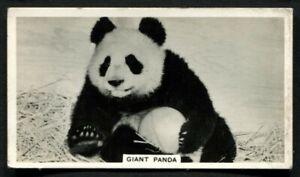 Tobacco-Card-Ardath-PHOTOCARDS-FILM-ETC-GROUP-M-Standard-1939-Giant-Panda