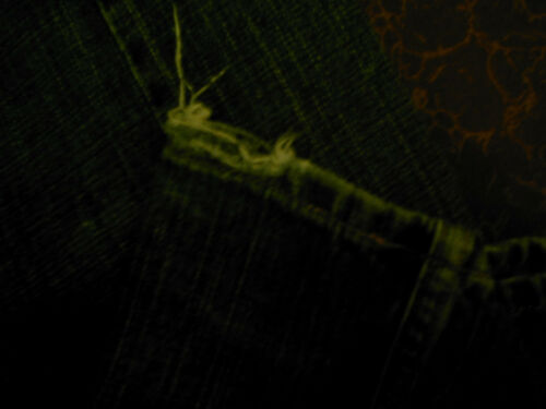 droite utilis 505 Jeans Levis coupe YPxnqwBxfz