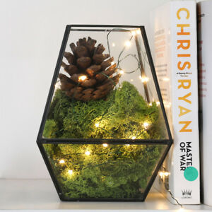 Spina-5m-per-interni-in-Verde-Firefly-Led-Micro-Luci-Filo-Home-Impianto-Home-Decor