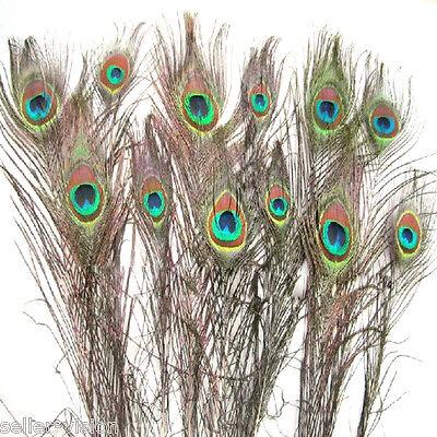 12 Natürlich Pfau Auge Federn Klein 25,4-30,5 cm ideal für Handwerk Kunst Hut