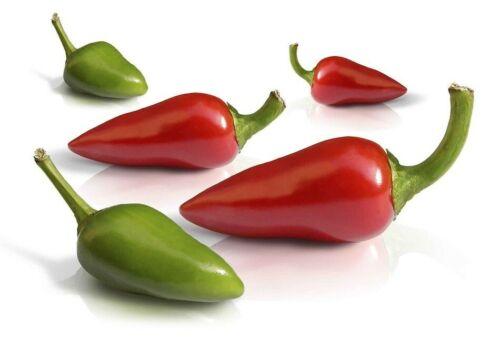 Pimienta Picona Canaria ,Capsicum annuum 30 semillas hot chili seed mojo picon