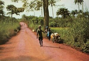 Vintage-Postcard-Cattle-on-the-Road-to-Yele-Sierra-Leone-Africa-79W