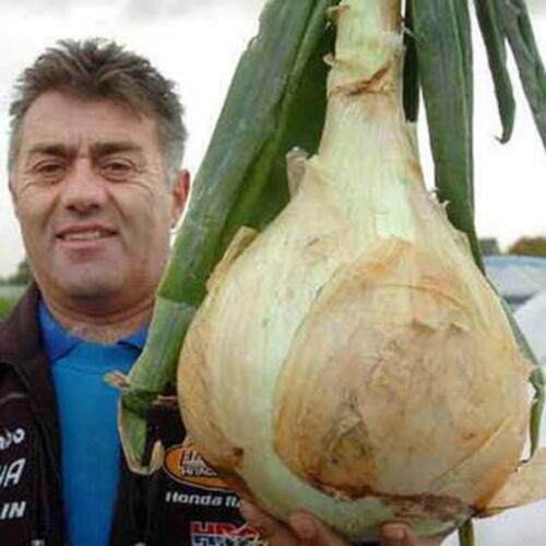 50X Giant Oignon Graines De Légumes Sans OGM Rare Delicious Outdoor Plant I7J9