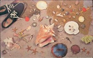 p0p-Postcard-Seashells