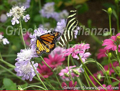 Blumen Wiesen Mischung * 1000 Samen * Blumenteppich * kein Gras * essbare Blumen