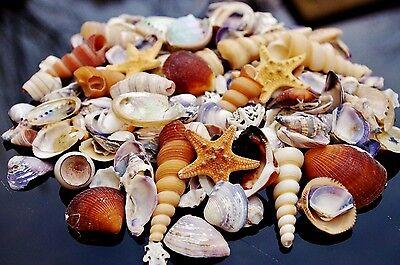 Crushed SeaShells and Starfish Beach Mixed Sea Shells 300g Bag
