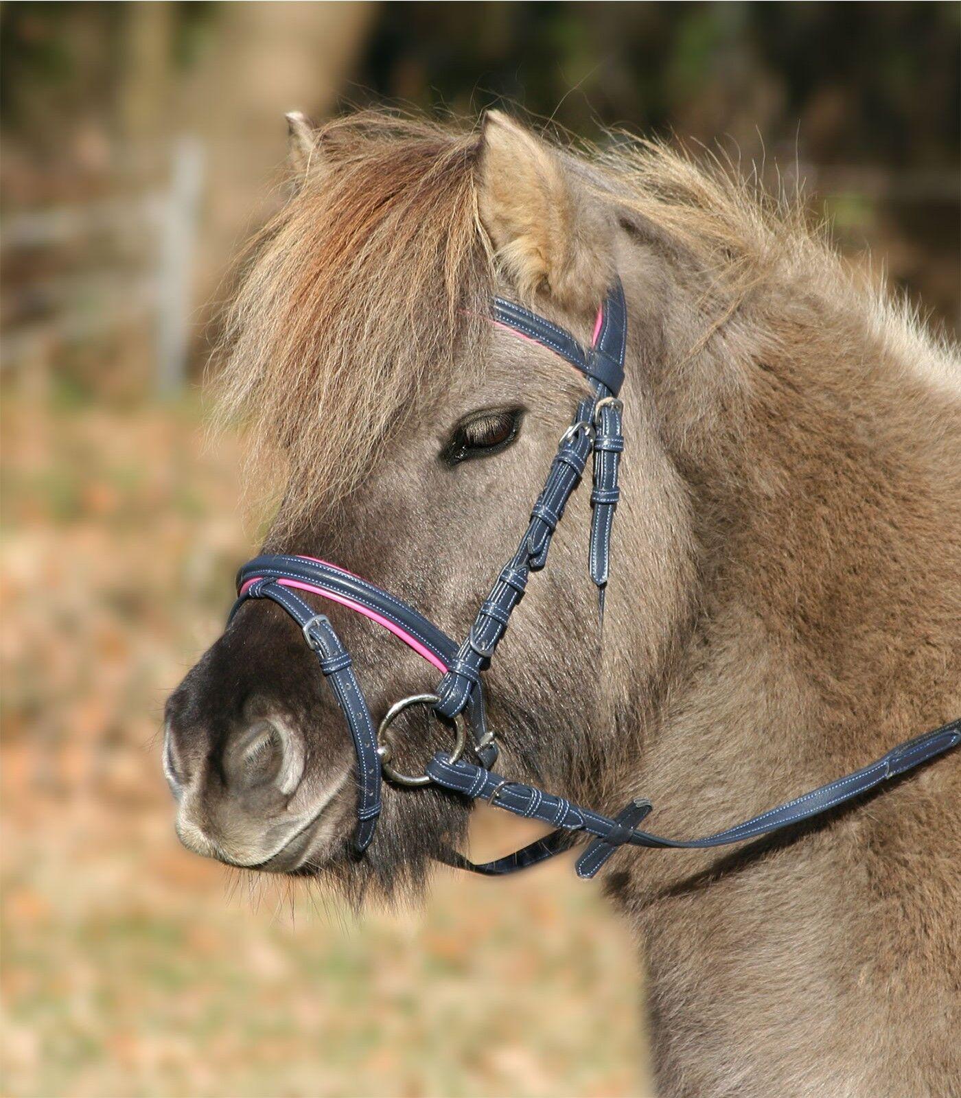 Brida, Ponytrense, Brida, Ponytrensenzaum Unicorn 2  , blue Noche   Fucsia  shop makes buying and selling