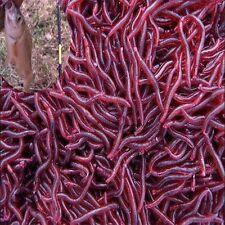 50Pcs Weiche rote Earthworm Fischköder Wurmköder Crankbaits Haken Köder-Gerät