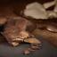 Kakaomasse-Bio-Kakaobutter-kaltgepresst-Rohkost-ohne-Zusatzstoffe-fuer-Schokolade Indexbild 9