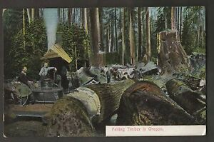 Felling-Timber-in-Oregon-Lumberjacks-with-Steam-Donkey-engine-Pre-1915-Postcard