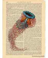 Jellyfish Art Print on Antique Book Page Vintage Illustration Discomedusae 3