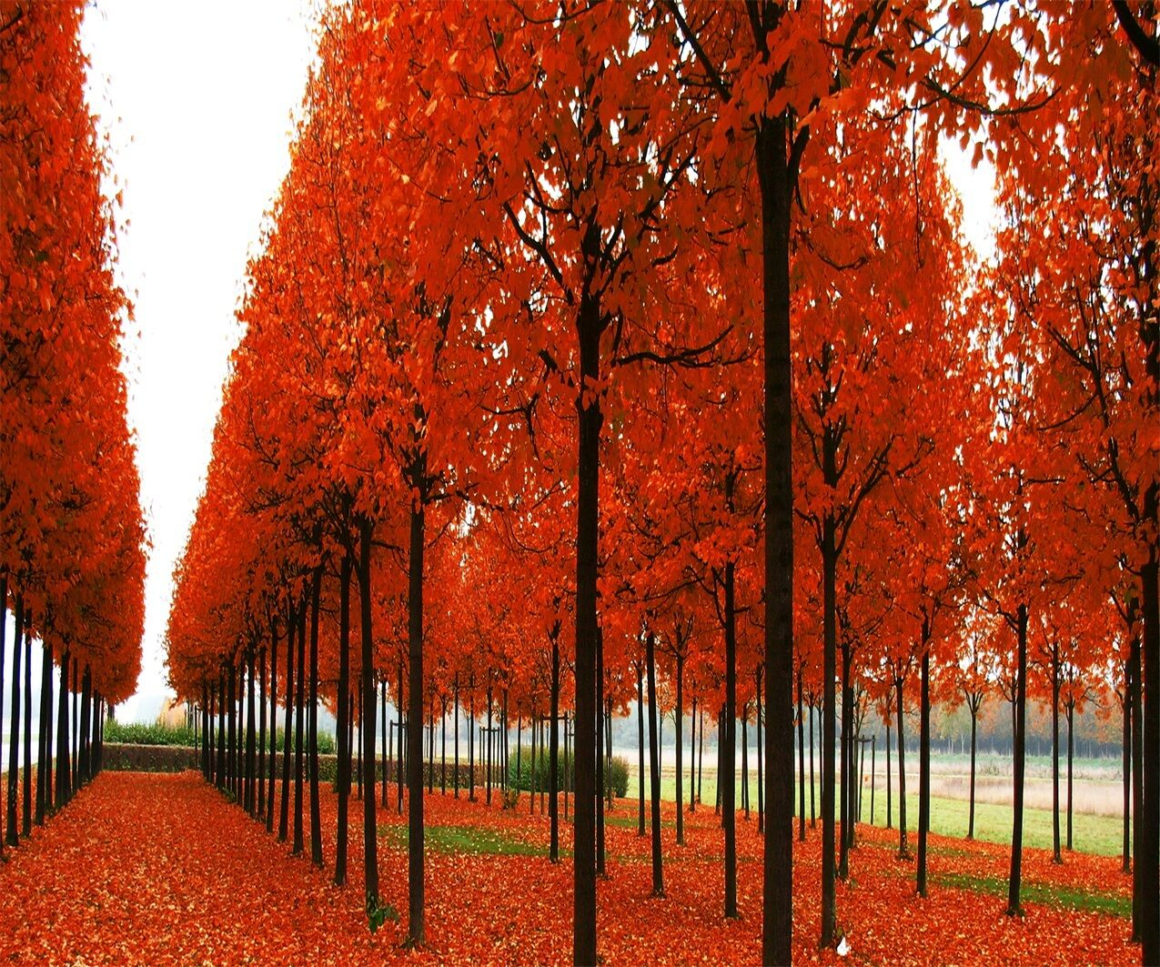 3D orange Forest 51 Wall Paper Wall Print Decal Wall Deco Indoor AJ Wall Paper