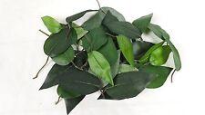 25  künstliche Blätter Grünpflanze Ficus Blatt Dekoration Basteln Floristik