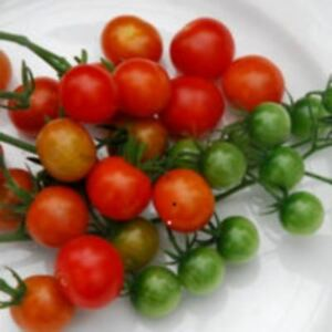 Vegetable - Tomato - Tess Land Race Currant - 25 seeds