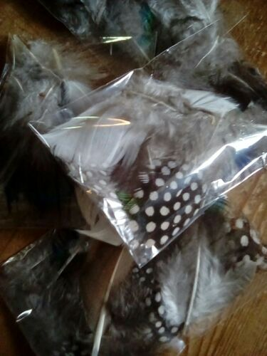 20 plus Feathers Packet 1 gram Guinea Fowl Quail Peacock etc crafting,cards