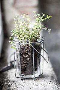 Ib-Laursen-Korb-Halter-Toepfe-Haenger-Draht-Glaeser-Utensilo-Kueche-Blumen-Pflanzen