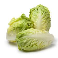 500 Graines non traitées salade Laitue Romaine SUCRINE - tendre et croquante