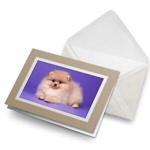 Greetings-Card-Biege-Pomeranian-Spitz-Dog-Puppy-Fluffy-24051