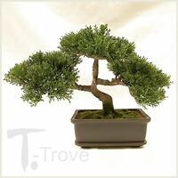 Artificial Japanese Cedar Bonsai Tree 9 Inch Tall, New, Free Shipping