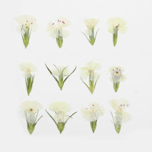 Pressed pink Real Flowers dried flower for women gift ideas 12pcs 102292