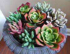 8 Artificial mini plants unkillable Succulents Grass Home Garden Decoration