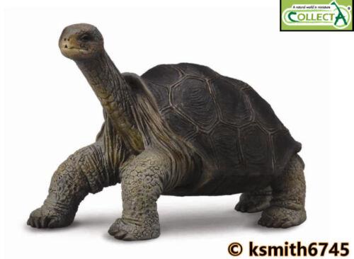 Collecta PINTA île Tortue Jouet en plastique Wild Zoo Animal * nouveau