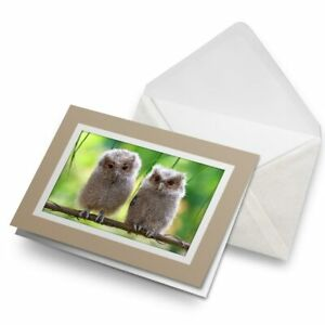 Greetings-Card-Biege-Cute-Baby-Owls-Wild-Nature-2322