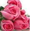 Semillas-rosas-disponible-en-9-tonos-diferentes-10-20-o-30-semillas miniatura 2