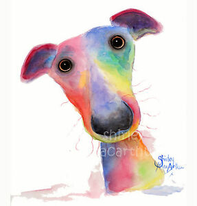 WHIPPET GREYHOUND PRINTS WaLL ART CaNVaS of Original Painting HANK by SHIRLEY M