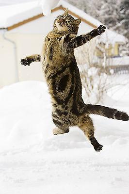 Ansichtskarte standing white cat weiße Katze macht Männchen