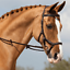 thumbnail 3 - Horseware Rambo Micklem Competition Bridle - FEI Approved