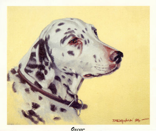 DALMATIAN SPOTTED COACHING DOG FINE ART PRINT Head Study OSCAR By Peter Deighan