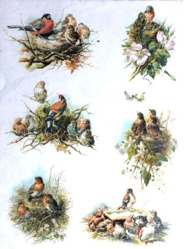 Decoupage Sheets Rice Decoupage Paper Lovely birds 3 Scrapbooking