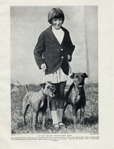 IRISH TERRIER NAMED DOGS AND GIRL AT BELFAST SHOW OLD ORIGINAL 1930/'S DOG PRINT