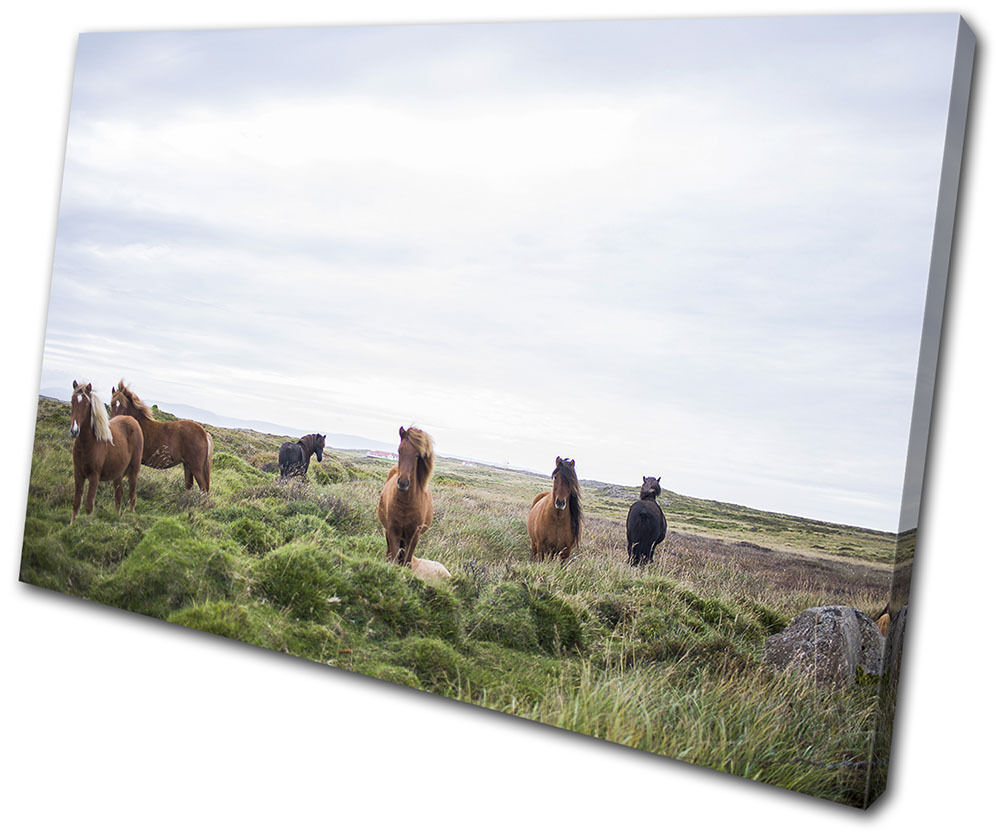Horses Nature Landscapes SINGLE TOILE murale ART Photo Print